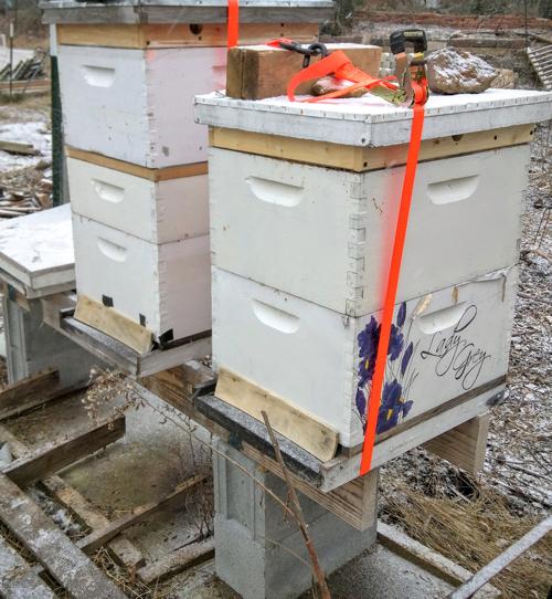 garden_bees