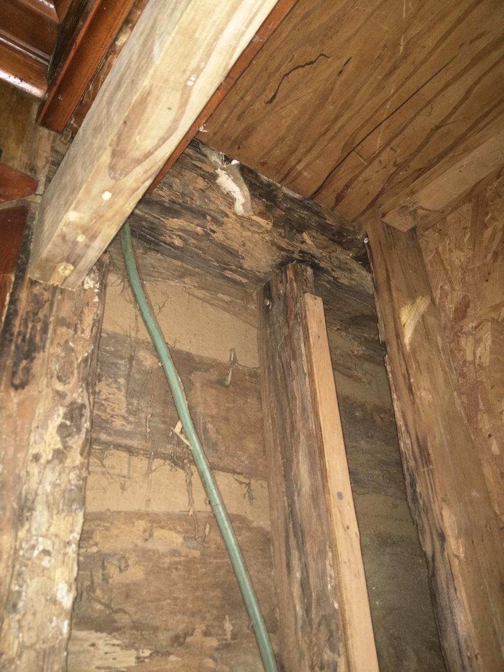 termites closet 3