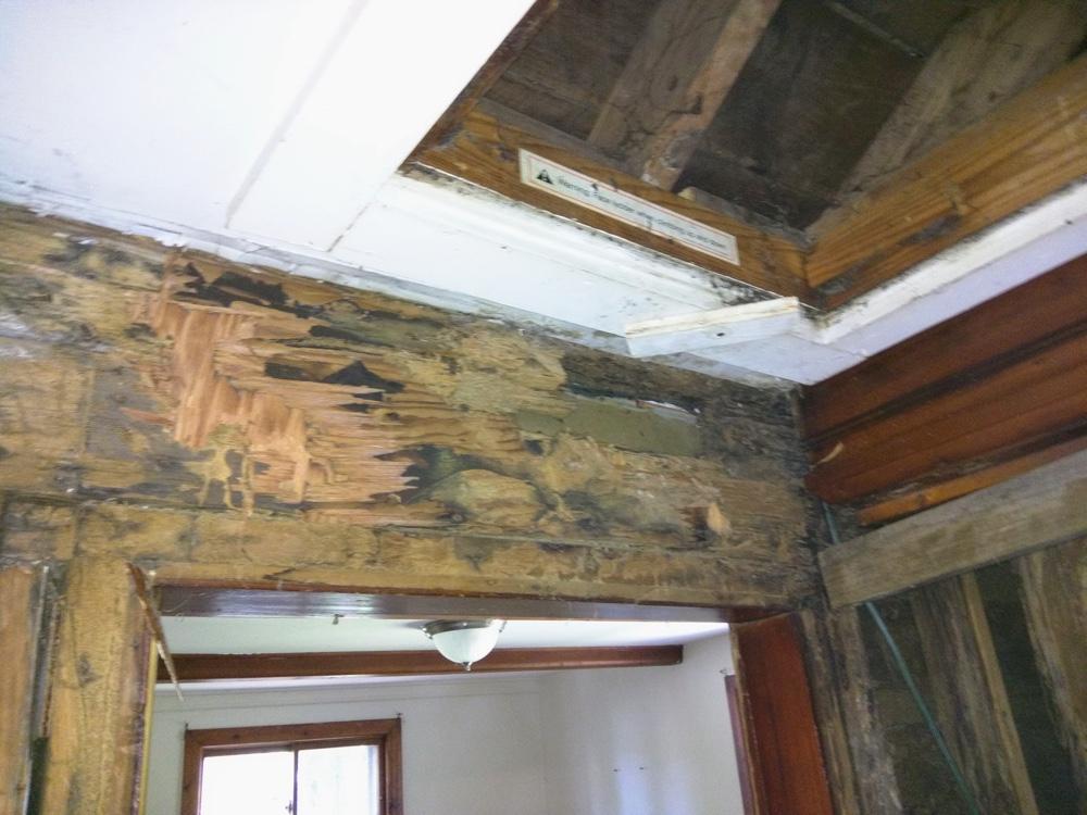 termites closet 4