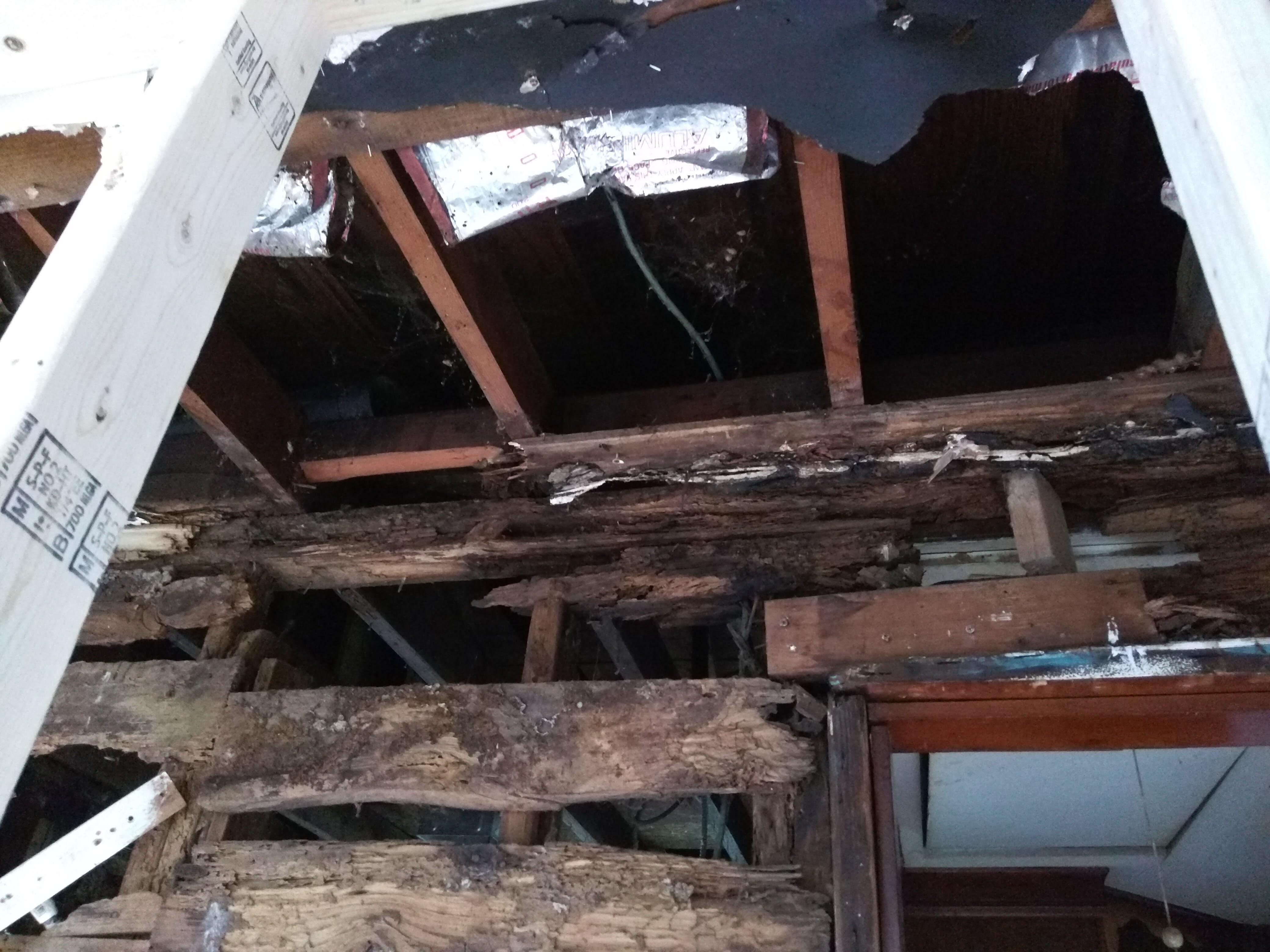 termites closet 5