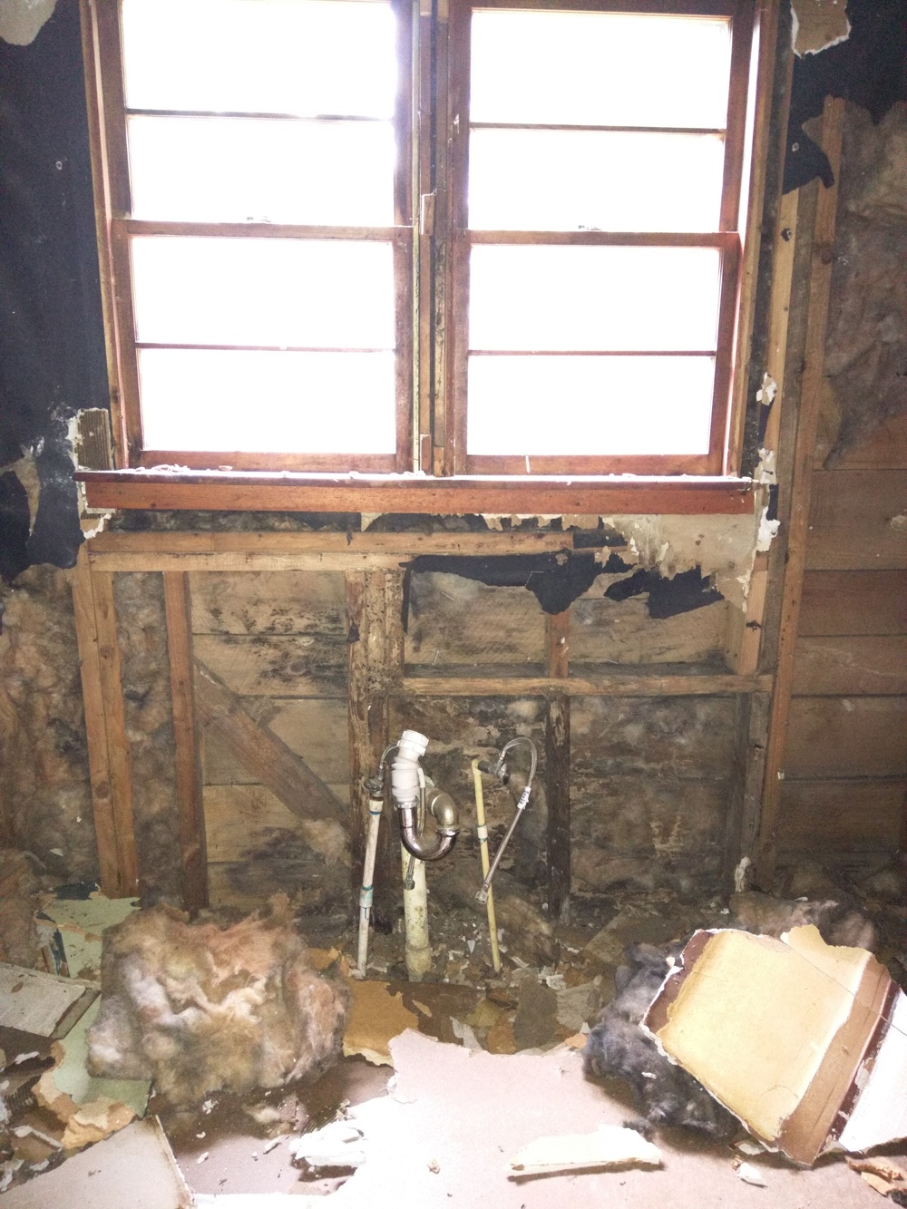 termites kitchen
